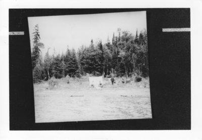 Otter Cove - 1920's