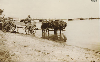 Horses and buggy at waterfront