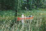Barry Matthews with a canoe-full of Purple Loosestrife