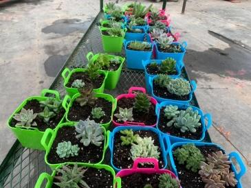 The Flowershed Succulents for Hillsview Active Living Centre Members