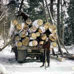 Loading logs on truck in winter near Huntsville, Ontario, 1950.