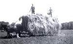 Threshing at Roy Goodfellow's