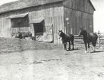 Barn and Horses