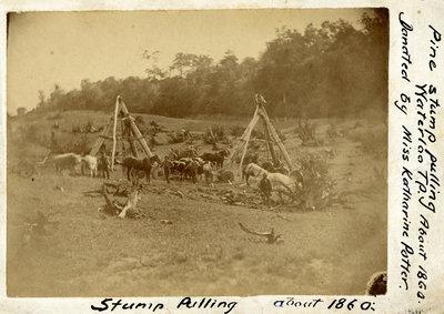 Pine stump pulling in Waterloo Township
