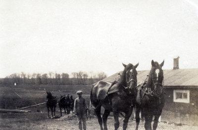 Pierre Primeaux et ses chevaux