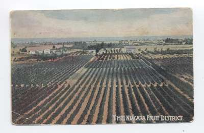 Niagara Fruit District Postcard
