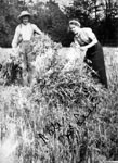 Nate MacLean and companion stacking sheaves of wheat
