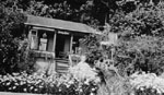 """Sunny Brae"" cottage."