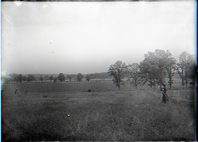 Scene from Cleary's fence. Young's Farm