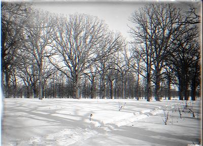 Snow Road thru the woods