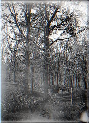 Woodland Ravine