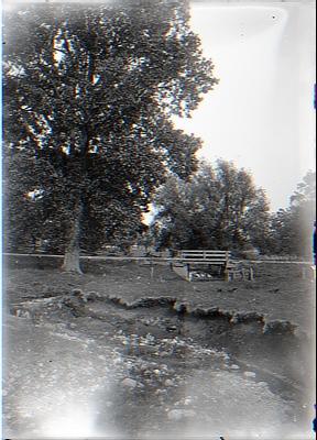 Cottonwood Tree and Culvert