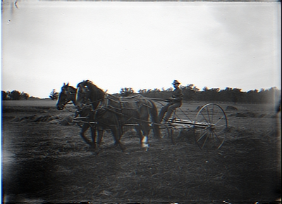 Taking Hay. Horse Rake