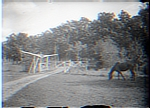 Horse Pasture with Fencing & Gate