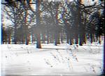 Wooded Winter Landscape