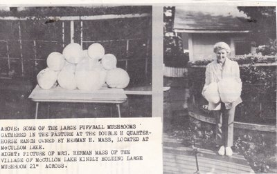 Large Puffball Mushrooms Held By Mrs. Herman Mass.