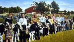 Welland mural depicting cattle juding at the Welland Fair