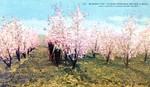 Blossom Time Niagara Peninsula Ontario Canada
