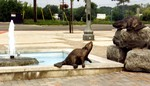 Welland Transit Terminal - pond in front of building - Canadian beaver statues