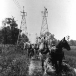 A team of horses being used to pull line cables for the Ontario Power Company