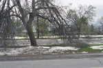 Aftermath of Fort Erie Snowstorm, October 12, 2006 - Damage at north side of Old Fort Erie