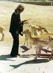 Feeding the Deer in Marineland