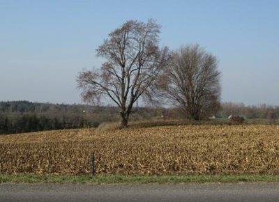 Carscallen-Hinch Farm Burial Ground