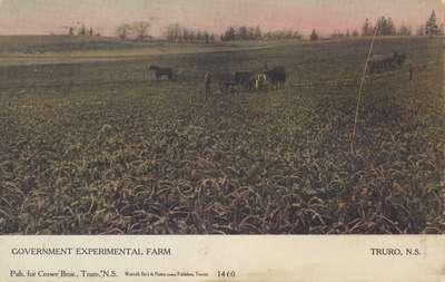 Government Experimental Farm, Truro, N.S.