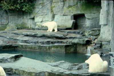 Toronto Zoo '68
