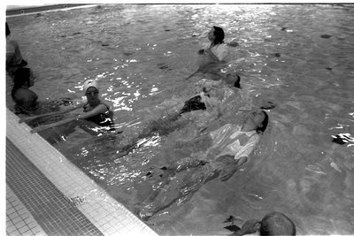 Adult Swimming Program