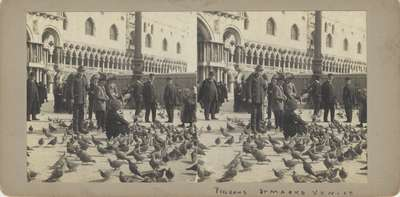 Pigeons in Saint Mark's Square