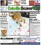 Oakville Beaver8 May 2013