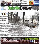 Oakville Beaver2 Jan 2014