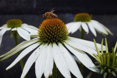 Home Bee Home