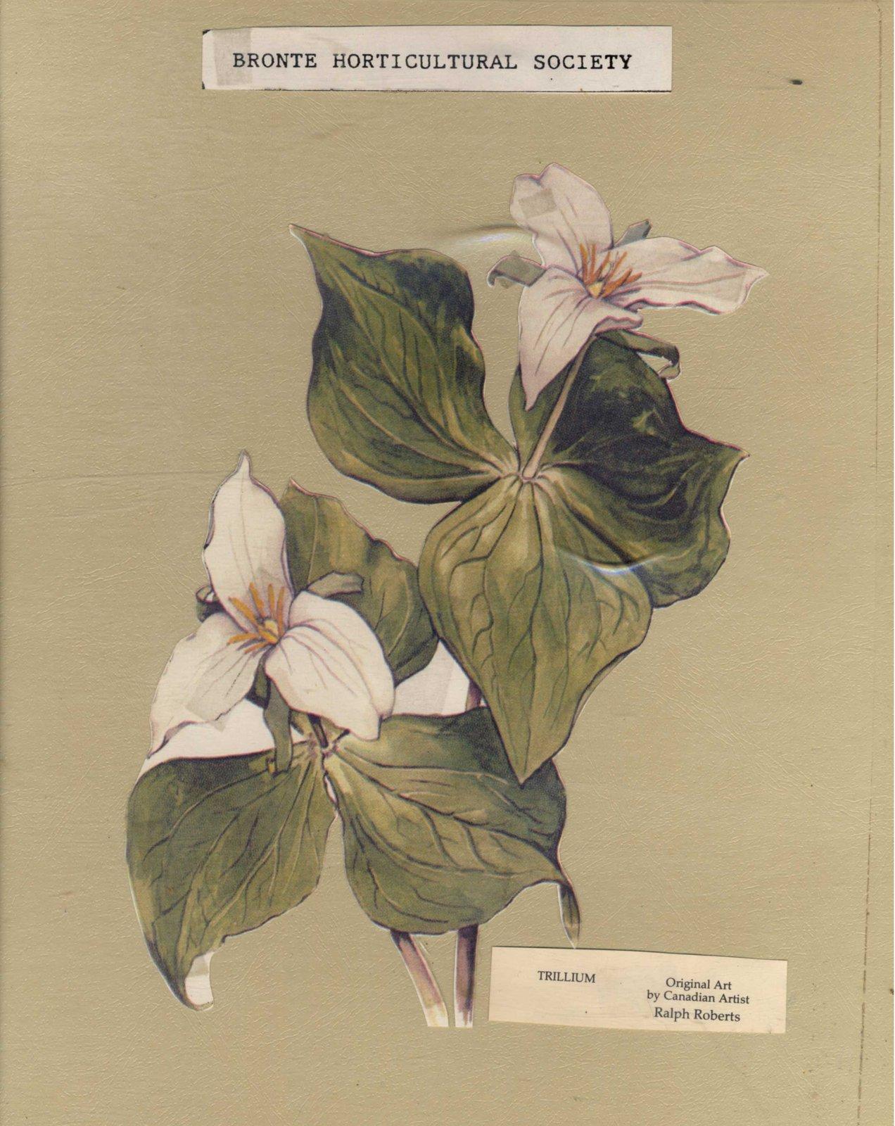 Bronte Horticultural Society Trillium