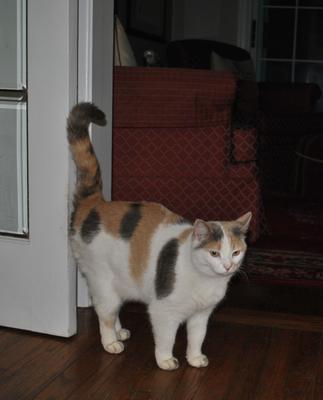 Kissa Waiting for Food