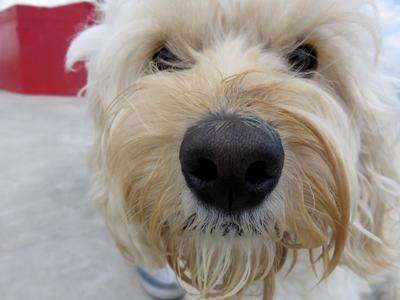 Dog sniffs camera Lens