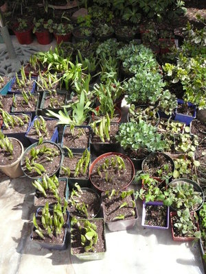 Plants repotted and ready for sale!