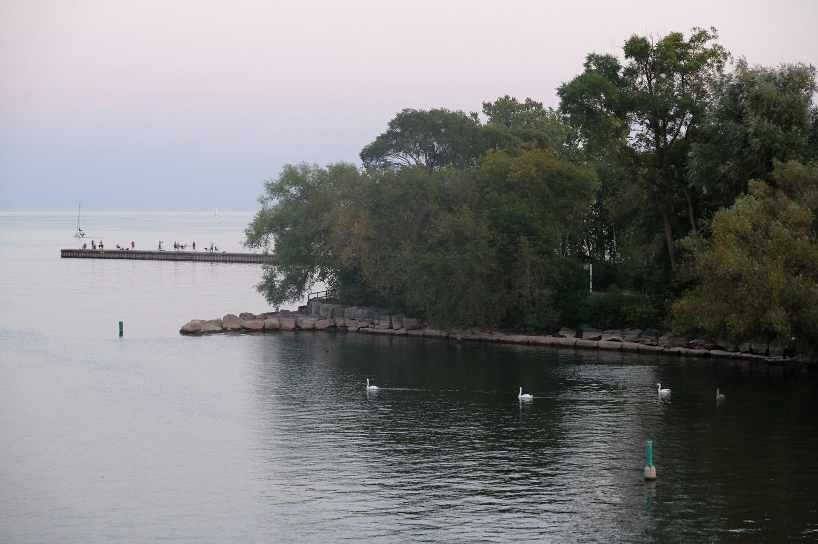Bronte Harbour Evening