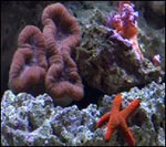 Is coral a plant or an animal?&nbsp;