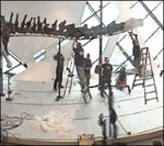 Constructing the Barosaurus
