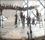 Constructing the Barosaurus