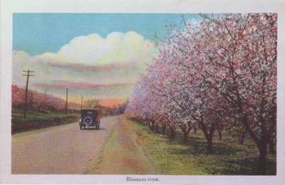 Souvenir view of St. Catharines & Port Dalhousie: Blossom-Time