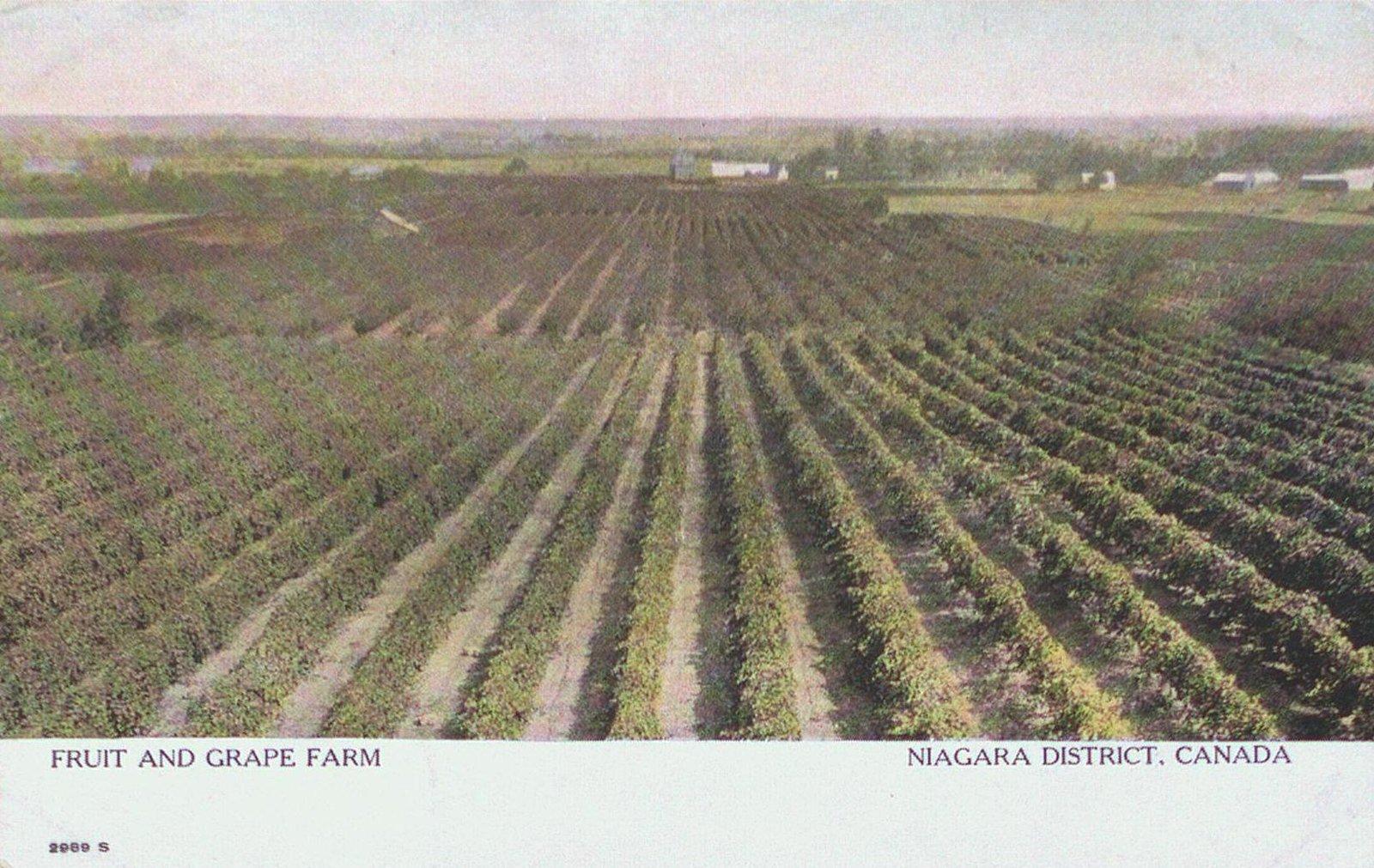 Fruit and Grape Farm, Niagara District