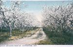A Peach Orchard in Niagara
