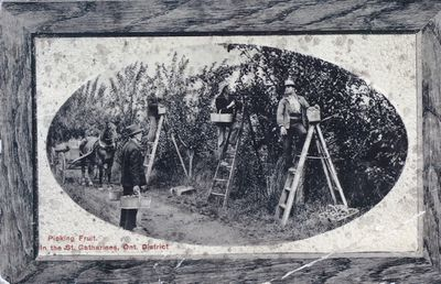 Farm Workers Picking Fruit