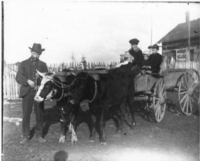 Yoke of Oxen, South River Area, circa 1900