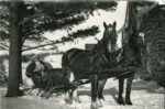 Woman and child in horse-drawn sleigh, circa 1935
