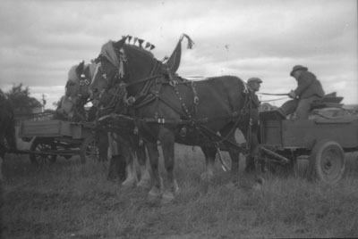 Horse Drawn Cart Getting Prepared, South River Agricultural Society Fall Fair Parade, circa 1940