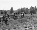 South River Children Planting Trees, May 20th, 1964